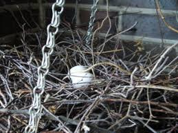 tauben auf dem balkon taubennest auf dem balkon balkon tauben anzahl kleinen nest
