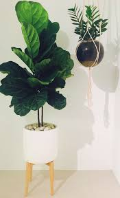 5 big and beautiful indoor plants flower power