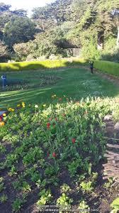 Botanical Gardens Golden Gate Park by Public Gardens Photo Tours Forum Queen Wilhelmina Garden At