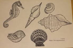 seashells tattoo sketch by ainaliora on deviantart