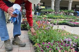 hyde park garden fair finds plants rarely seen before by u s