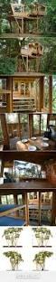 Tree House Home Best 25 Indoor Tree House Ideas On Pinterest Tree House