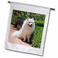american eskimo dog new mexico buy 3drose fl 4631 1 american eskimo dog garden flag 12 by 18
