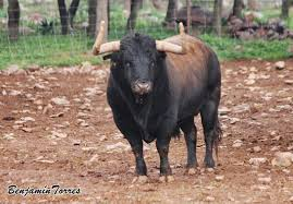 el blog del toro bravo marzo 2015