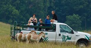 Ohio wildlife tours images The wilds specialty tours jpg