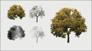 bath makes animated trees more like