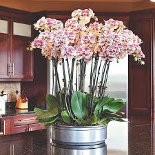orchid arrangements 6 beautiful phalaenopsis orchid arrangement ideas phalaenopsis