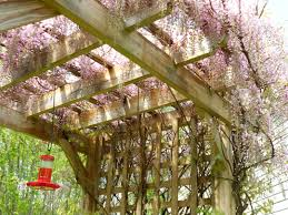 words of the week arbors trellises and pergolas maine coast