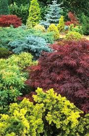 for future back retaining wall garden japanese maple acer palmatum
