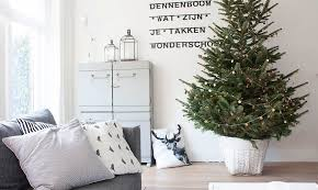 Small Decorated Christmas Tree Delivery by How To Choose A Living Tree To Replant After Christmas Inhabitat