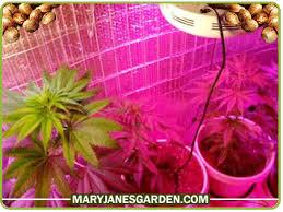 led marijuana grow lights led growing lights for growing marijuana weed growing led bulbs