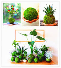 100 pcs bryophyte moss bonsai seeds lovely moss decorative