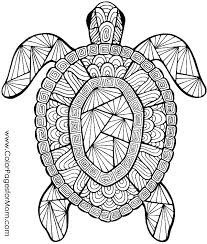beach coloring pages preschool summer coloring printables paw print coloring page cheetah print