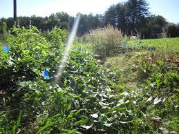 garden kw homestead