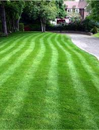 iron or ferrous sulphate a lawn treatment for green grass