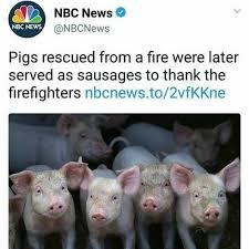 Funny Pig Memes - memebase pig all your memes in our base funny memes