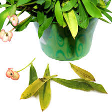 the ten most common problems of houseplants kathrynanddavid com