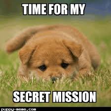 Secret Meme - mission puppy