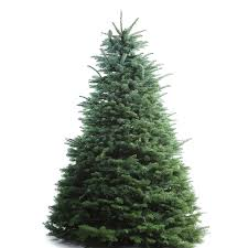 9 foot christmas tree shop 8 9 ft fresh noble fir christmas tree at lowes
