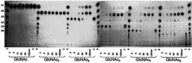 Serum Ular sds page of purified chia and deletion mutants 1 molec ular