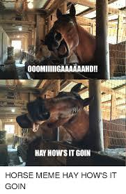 Meme Horse - 25 best memes about horse meme horse memes