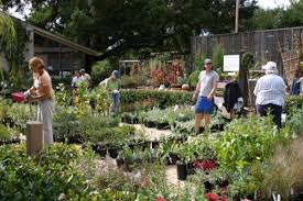 california native plants for the garden fall native plant sale in bloom at botanic garden news releases
