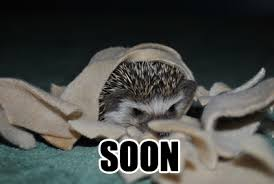 Hedgehog Meme - soon meme hedgie page 2 hedgehog central hedgehog pet care