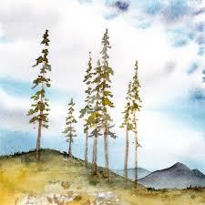 sub alpine tree study expeditionary