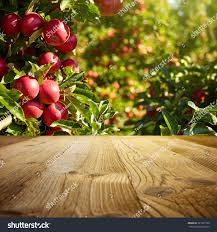 autumn apple orchard background stock photo 327301766 shutterstock
