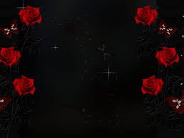 red and black rose wallpapers 11 desktop background