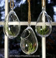terrarium design marvellous hanging glass plant terrarium hanging