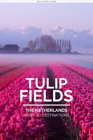 Netherlands Tulip Fields 7 Unbelievable Travel Destinations That Will Take Your Breath Away