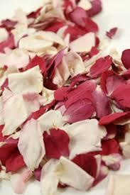flower petals flower petals petals orchid petals