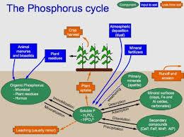 Garden Fertilizer Types - rock phosphate fertilizer garden myths