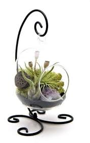top 10 best terrarium kits in 2018