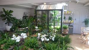 beautiful house plants w6 garden centre on twitter w6gardencentre a green house inspired