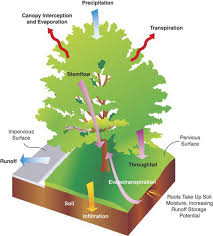 how do you calculate stormwater credits for trees part 1 why tree