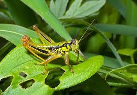 identifying garden pests lovetoknow