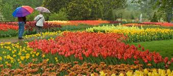 the 20 greatest destinations on earth for flowers fantastic88