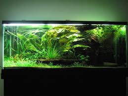 How To Aquascape A Planted Tank Debunked Co2 Myth See Tanks Without Carbon Dioxide