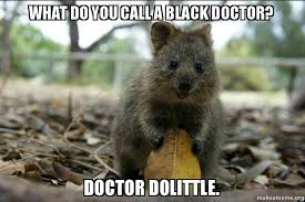 Meme Saw - offensive joke quokka new meme saw this started on another post