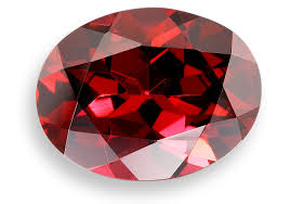 Birth Flower Of January - birthstone and birth flower for month of january connie u0027s world