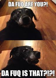 The Fuq Meme - da fuq are you da fuq is that suddenly sober dog quickmeme