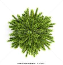 tree top stock images royalty free images vectors
