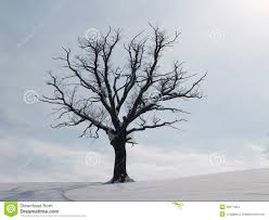 tree in winter season 3 stock images image 29271834