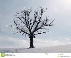 tree in winter season 3 stock images image 29271834