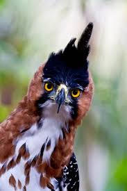 15 birds with snazzier hairdos than you mnn mother nature network