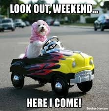 Look Out Meme - look out weekend here i come driving dog cute pet memes and