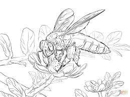giant honey bee coloring page free printable coloring pages