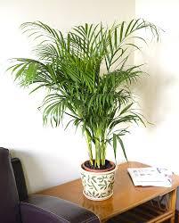 Indoor Flowering Plants by Indoor Plants Blooms Productivity In Business Homes Innovator